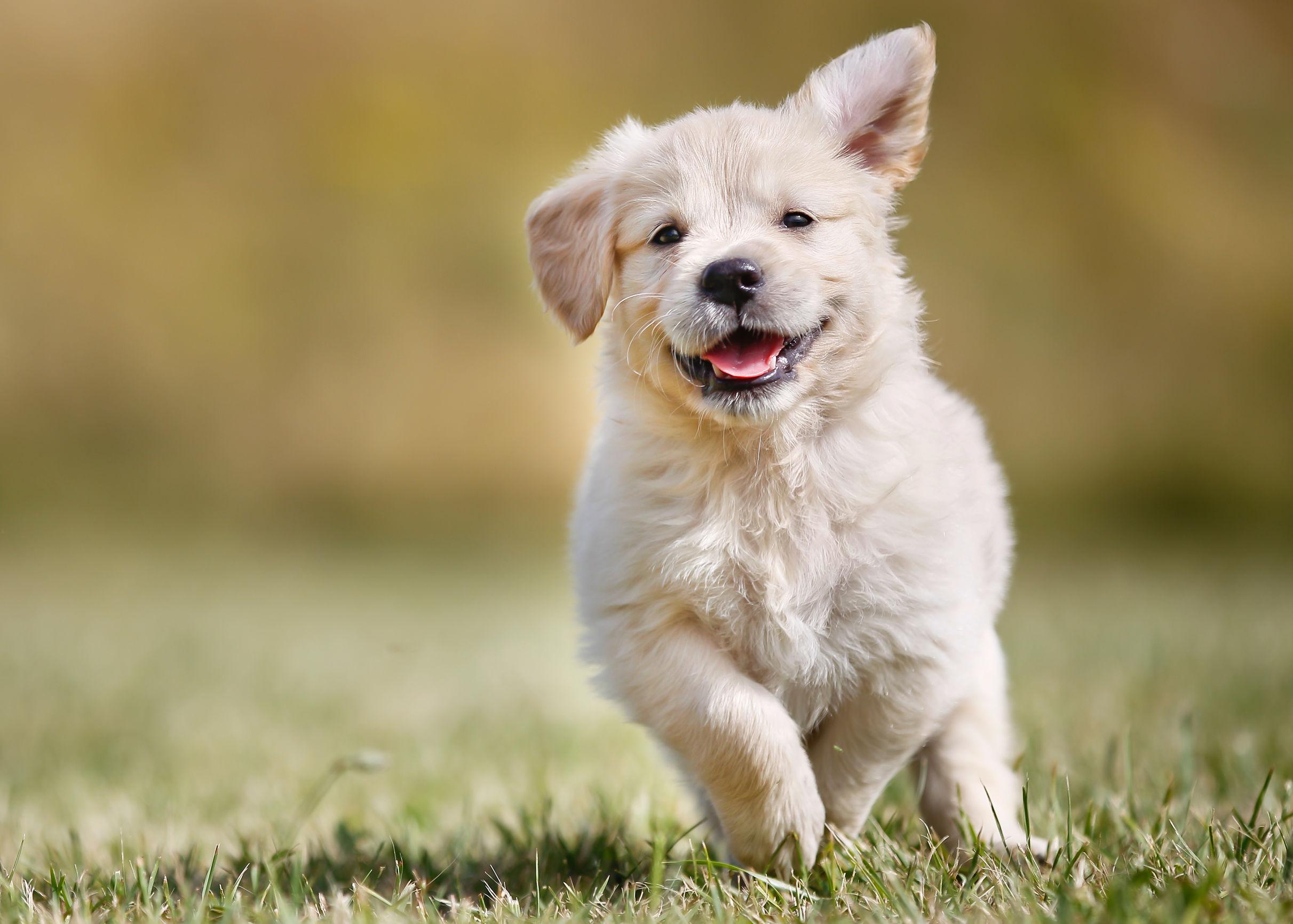 Miglior antiparassitario per cani in compresse 2021: Guida all'acquisto
