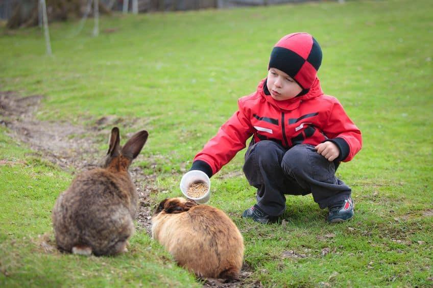 cibo-per-conigli-prodotto-xcyp1