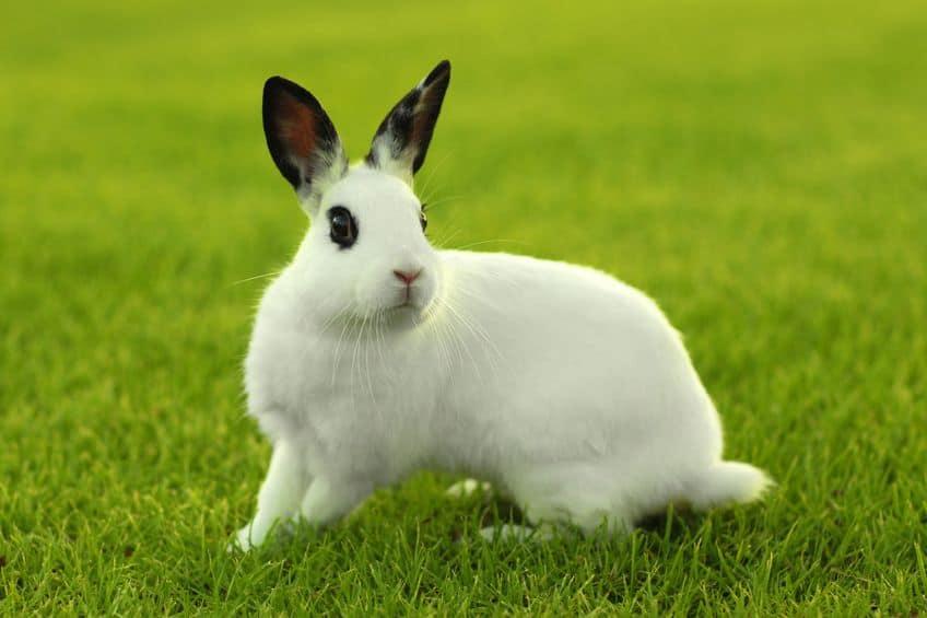 cibo-per-conigli-xcyp1