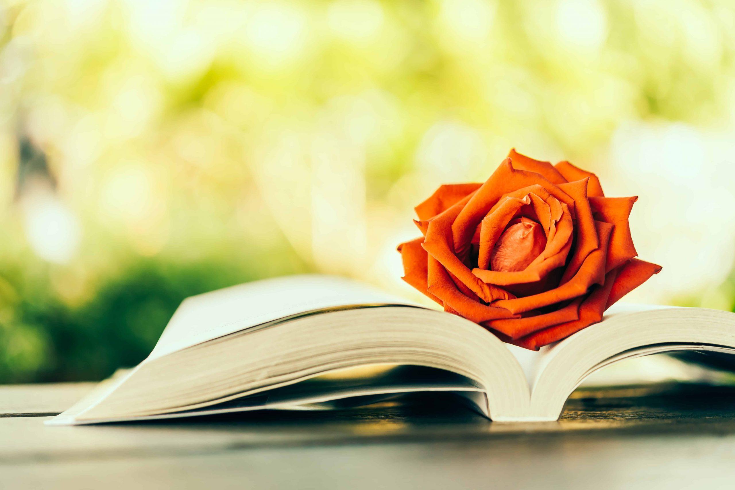 I migliori libri romantici del 2020: Guida all'acquisto
