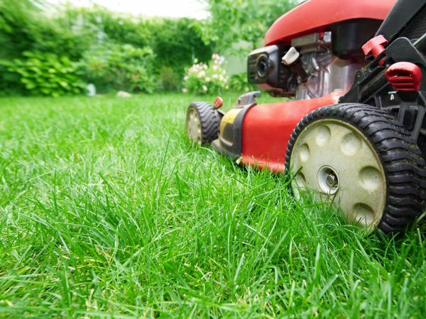 Lawn mower cutting green grass in backyard.Gardening background.