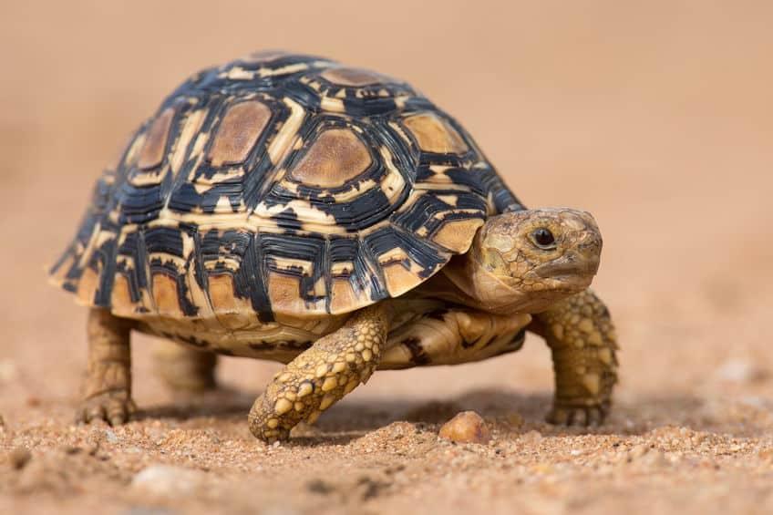 cibo-per-tartarughe-particolare-xcyp1