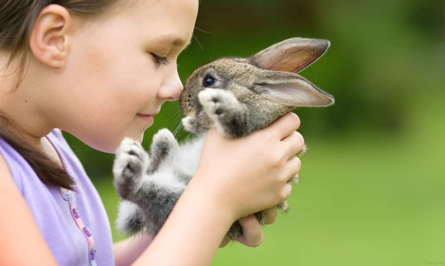 cibo-per-conigli-principale-xcyp1