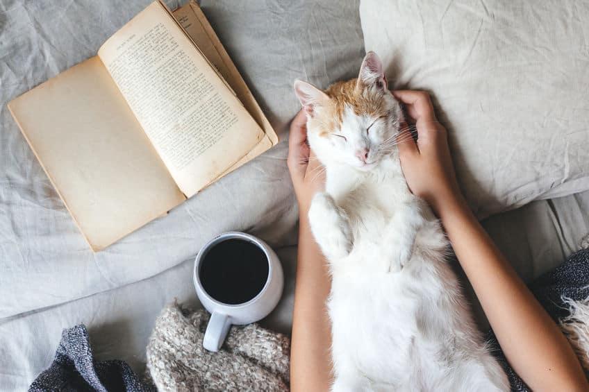 Gatto che viene coccolato sul letto
