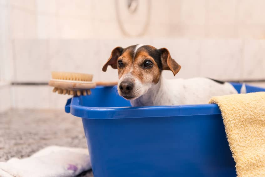shampoo-for-dogs-xcyp1