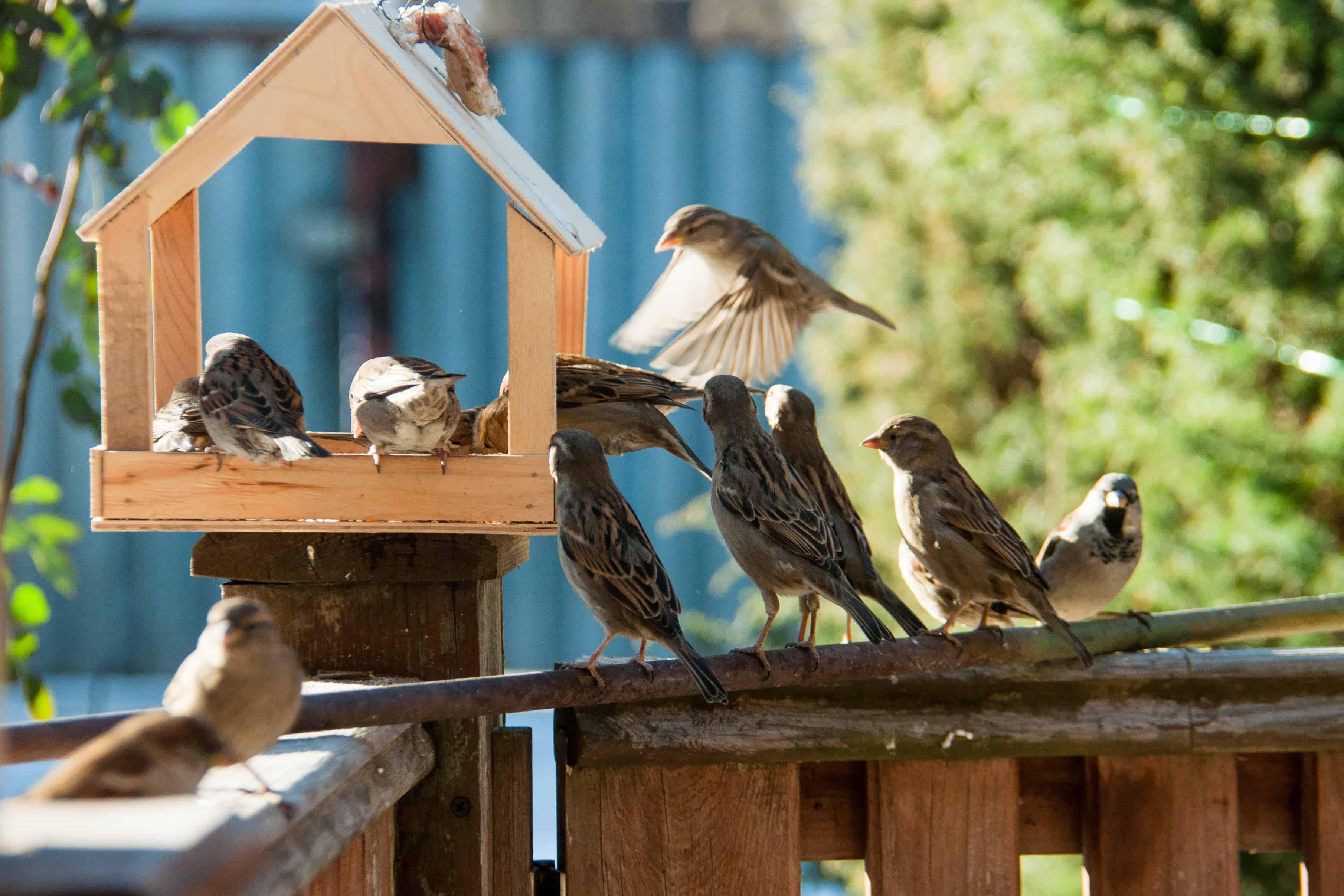 mangiatoia-per-uccelli-principale-xcyp1
