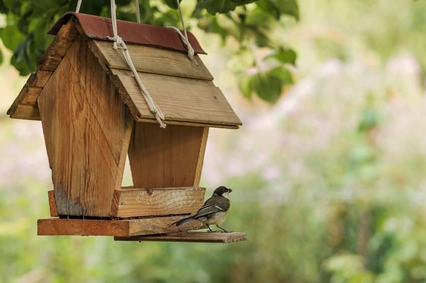mangiatoia-per-uccelli-prodotto-xcyp1