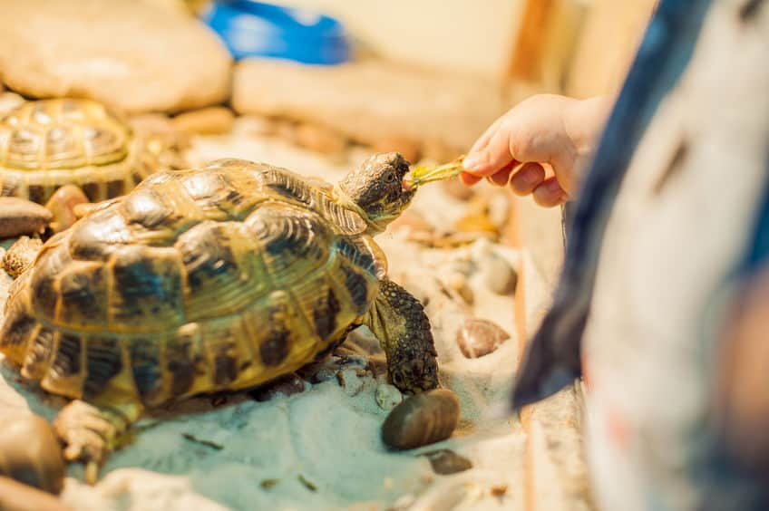 cibo-per-tartarughe-terza-xcyp1