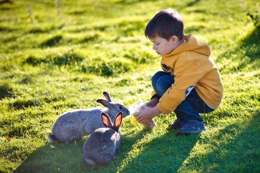 gabbia-per-conigli-giardino-xcyp1