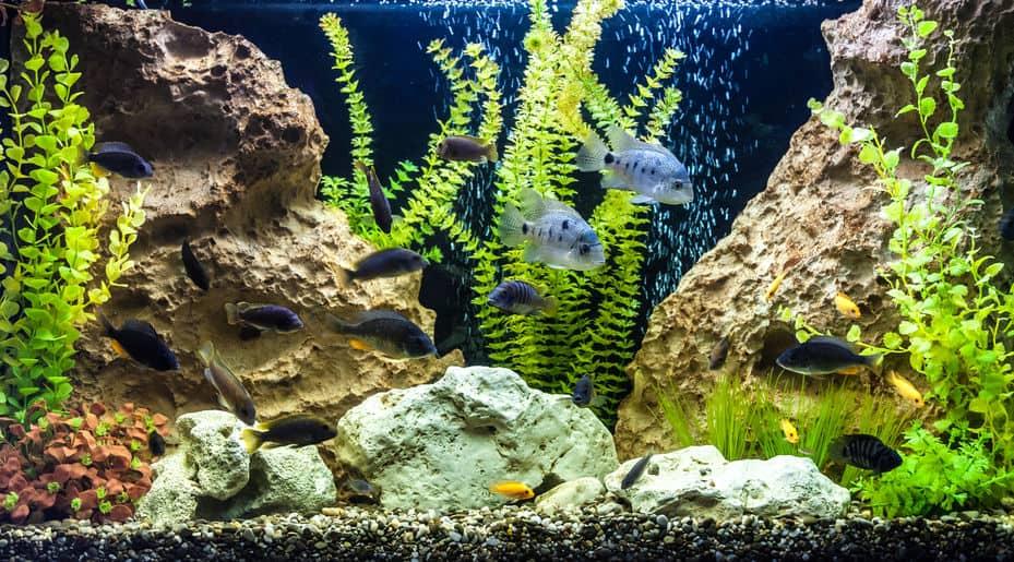 aquarium-for-fish-detail-xcyp1