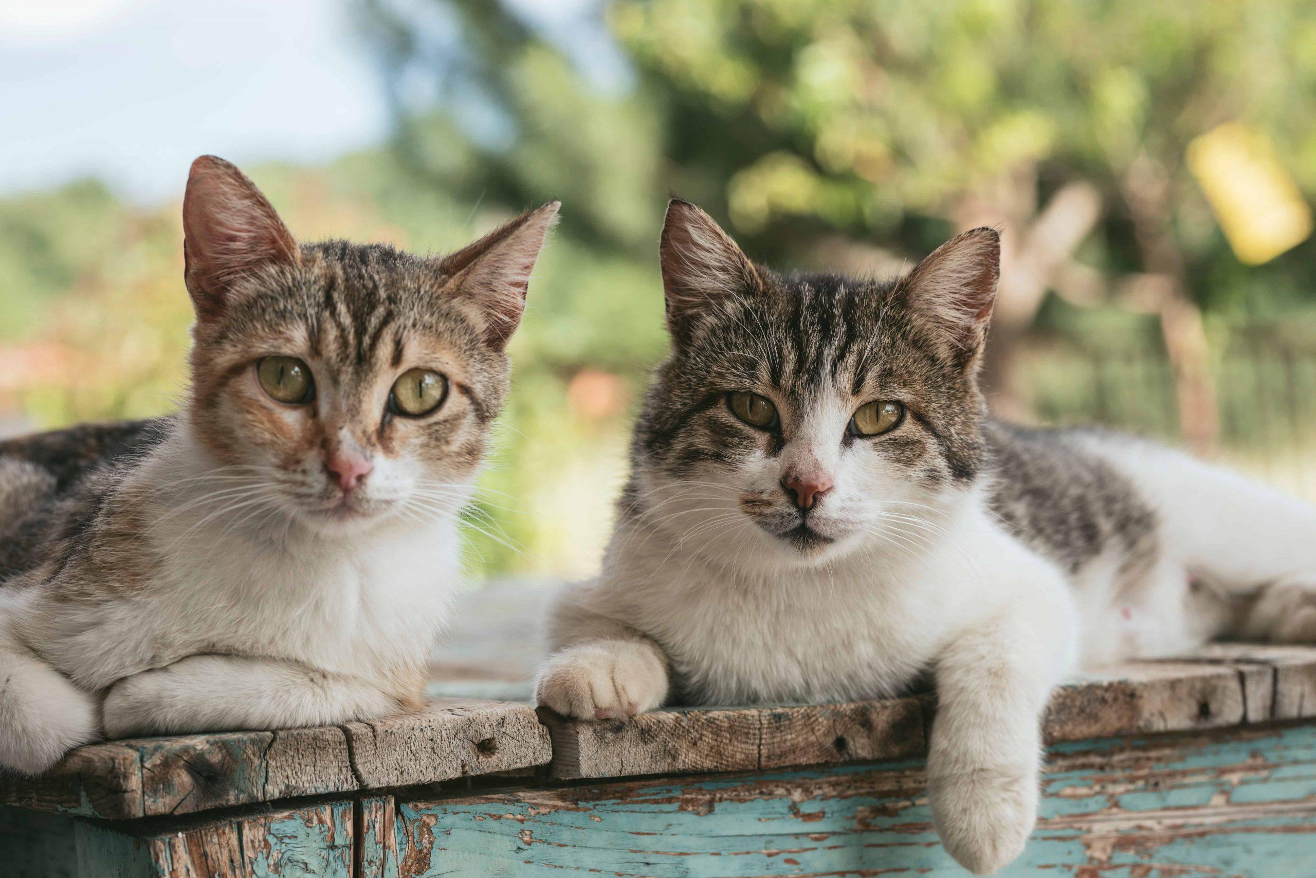 Miglior repellente per gatti 2021: Guida all'acquisto