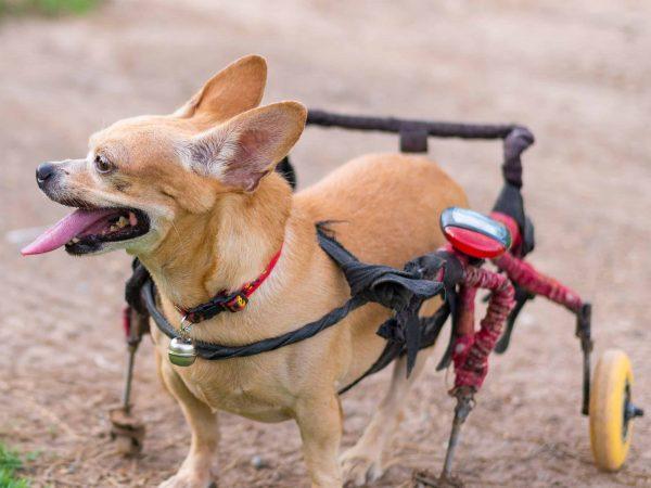 carrello-per-cani-disabili-principale-xcyp1