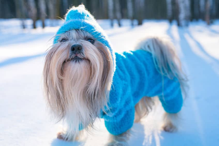 coat-for-dogs-before-xcyp1