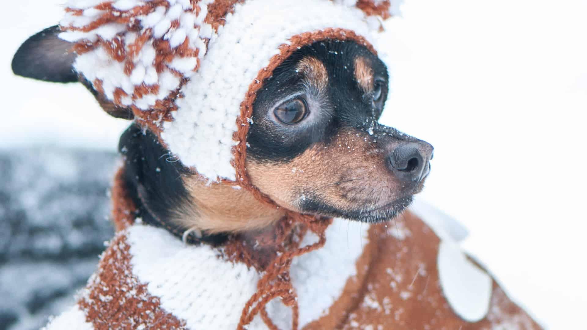 cappotto-per-cani-principale-xcyp1