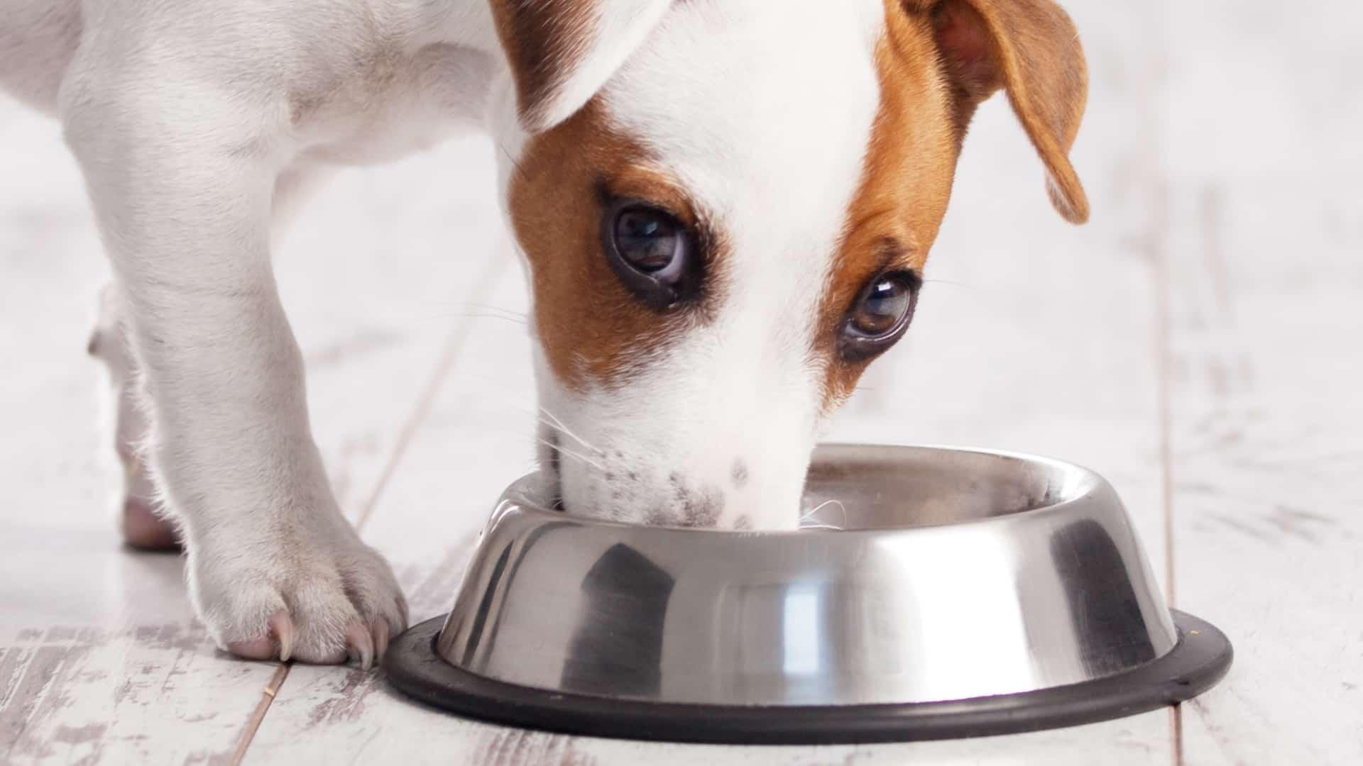 olio-di-salmone-per-cani-principale-xcyp1