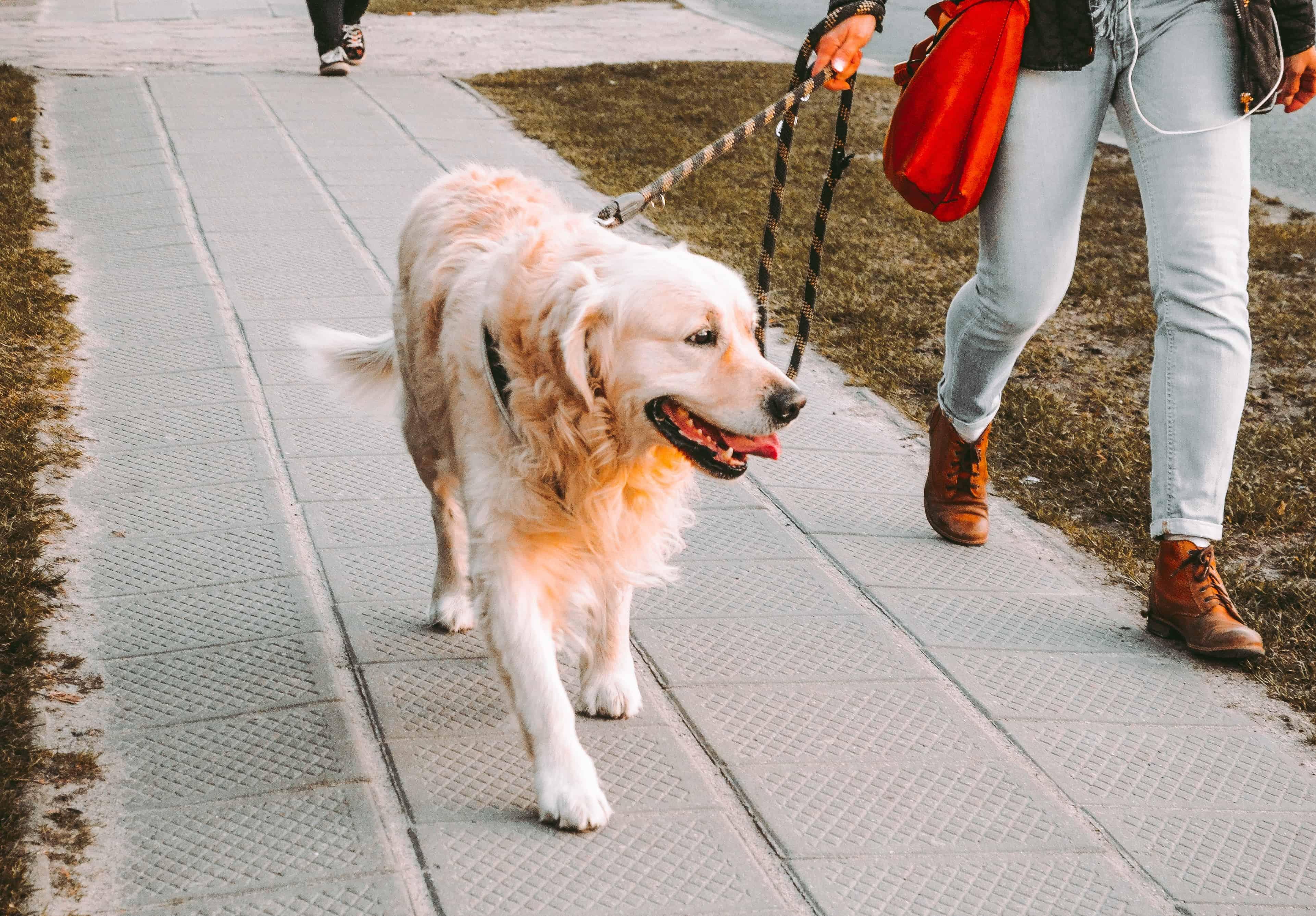 Cane a passeggio a guinzaglio