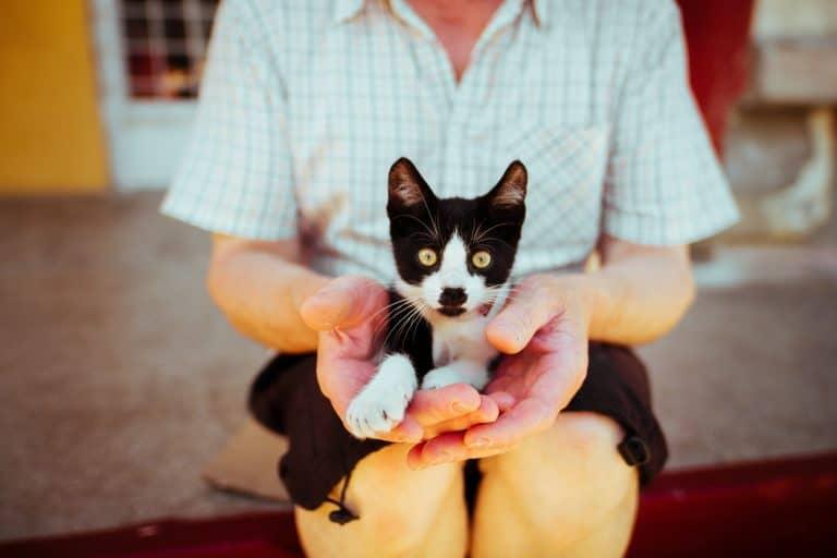 collare-per-gatto-cucciolo-xcyp1