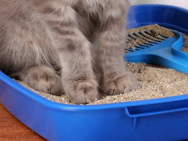 Miglior sabbia per gatti 2020: Guida all'acquisto