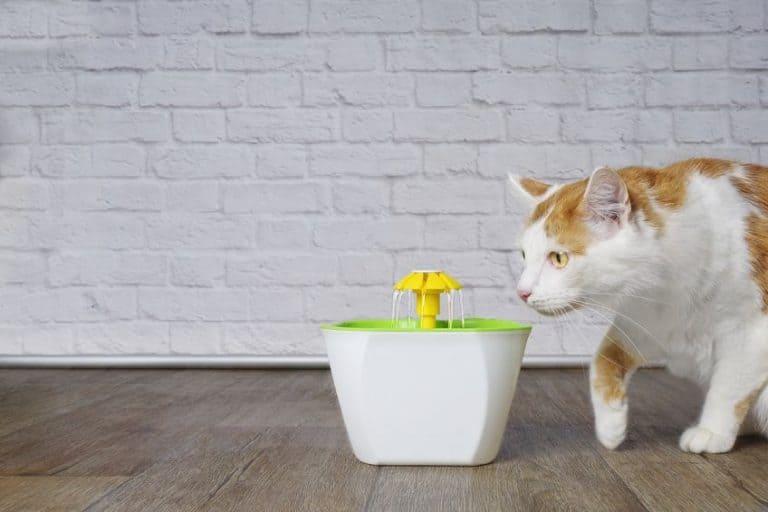 fontana-per-gatti-prima-xcyp1