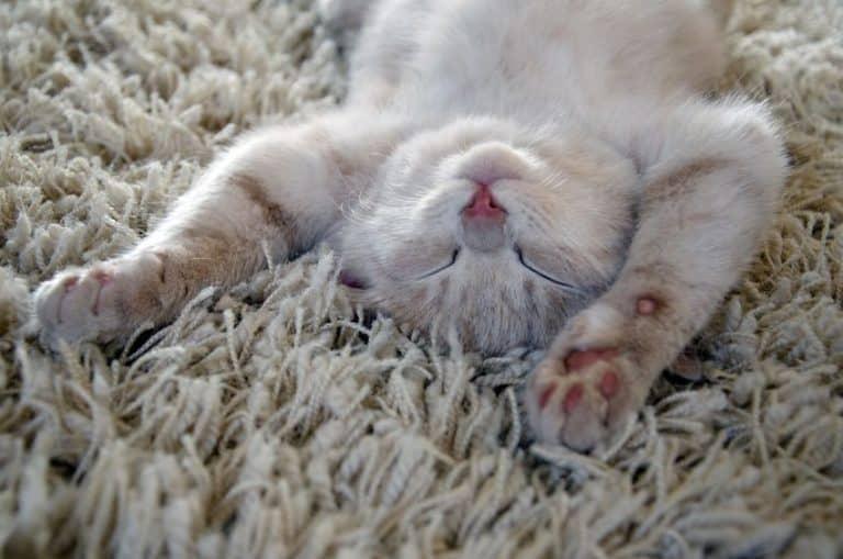 cuccia-per-gatti-letto-xcyp1