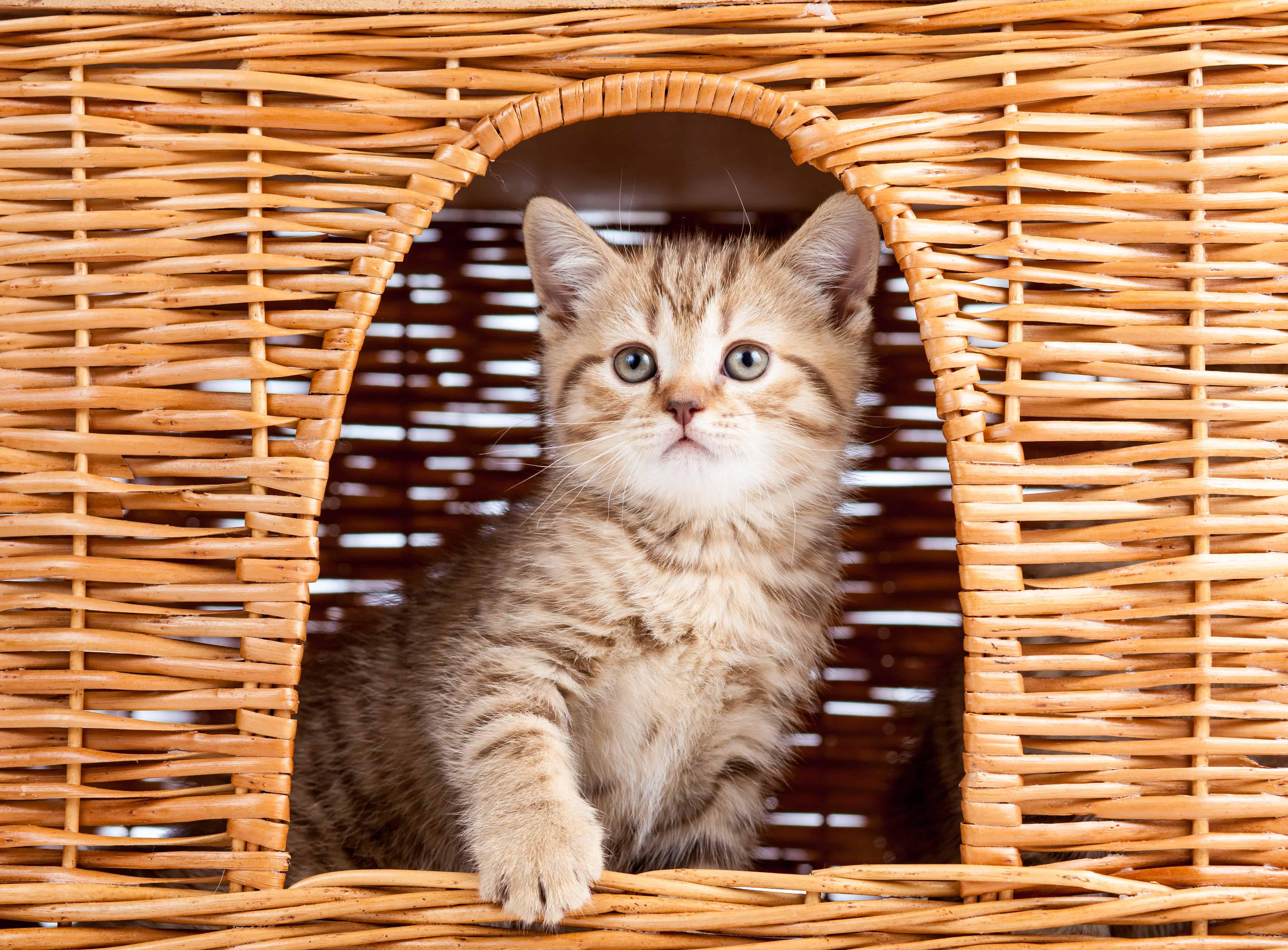 Gattino in una casetta