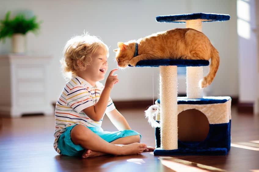 Bimbo che gioca con gatto