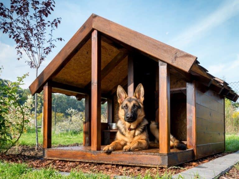 cucce-per-cani-grandi-da-esterno-prodotto-xcyp1