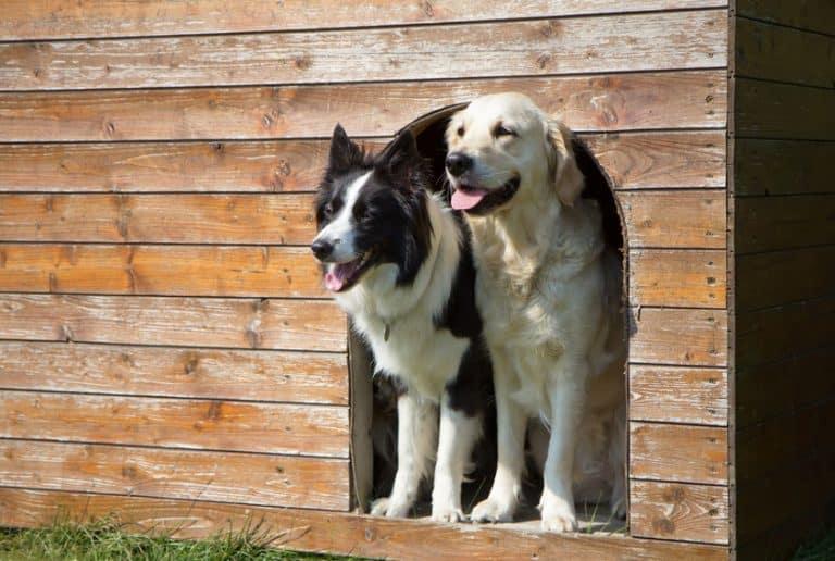 cucce-per-cani-grandi-da-esterno-seconda-xcyp1