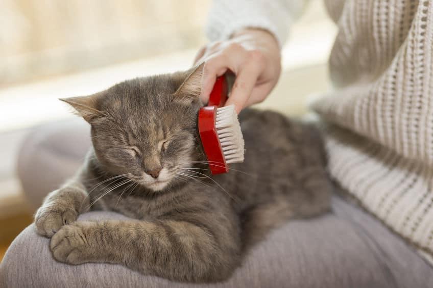 pettine-per-gatti-spazzola-xcyp1