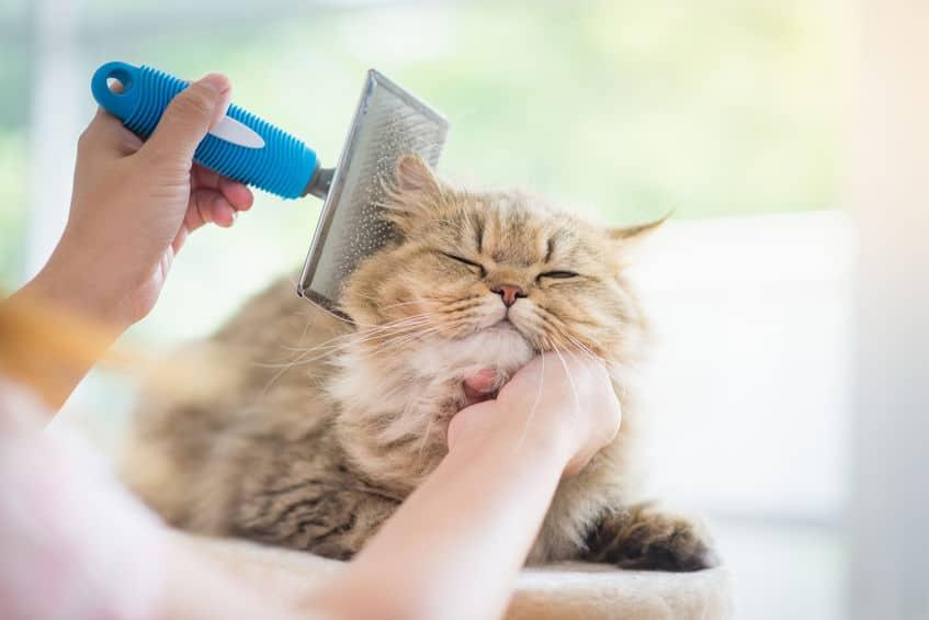 pettine-per-gatti-prodotto-xcyp1