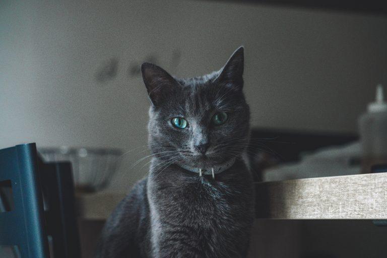 collare-per-gatto-seconda-xcyp1