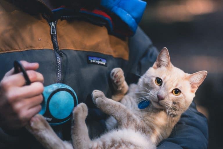 collare-per-gatto-prima-xcyp1
