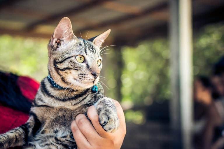 collare-per-gatto-terza-xcyp1