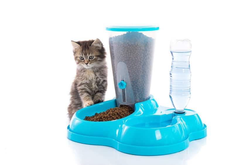 ciotola-per-gatti-prodotto-xcyp1