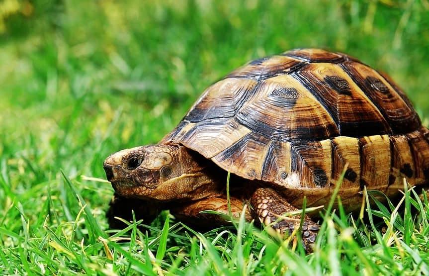 cibo-per-tartarughe-xcyp1