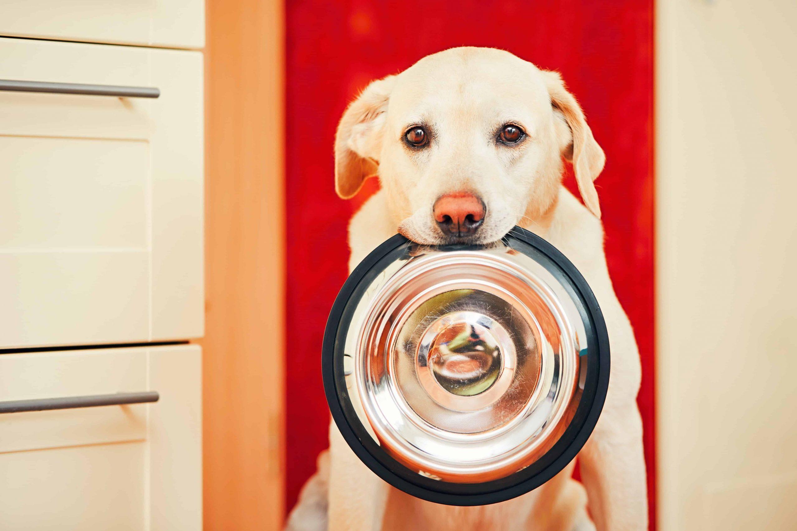 Miglior cibo ipoallergenico per cani 2021: Guida all'acquisto