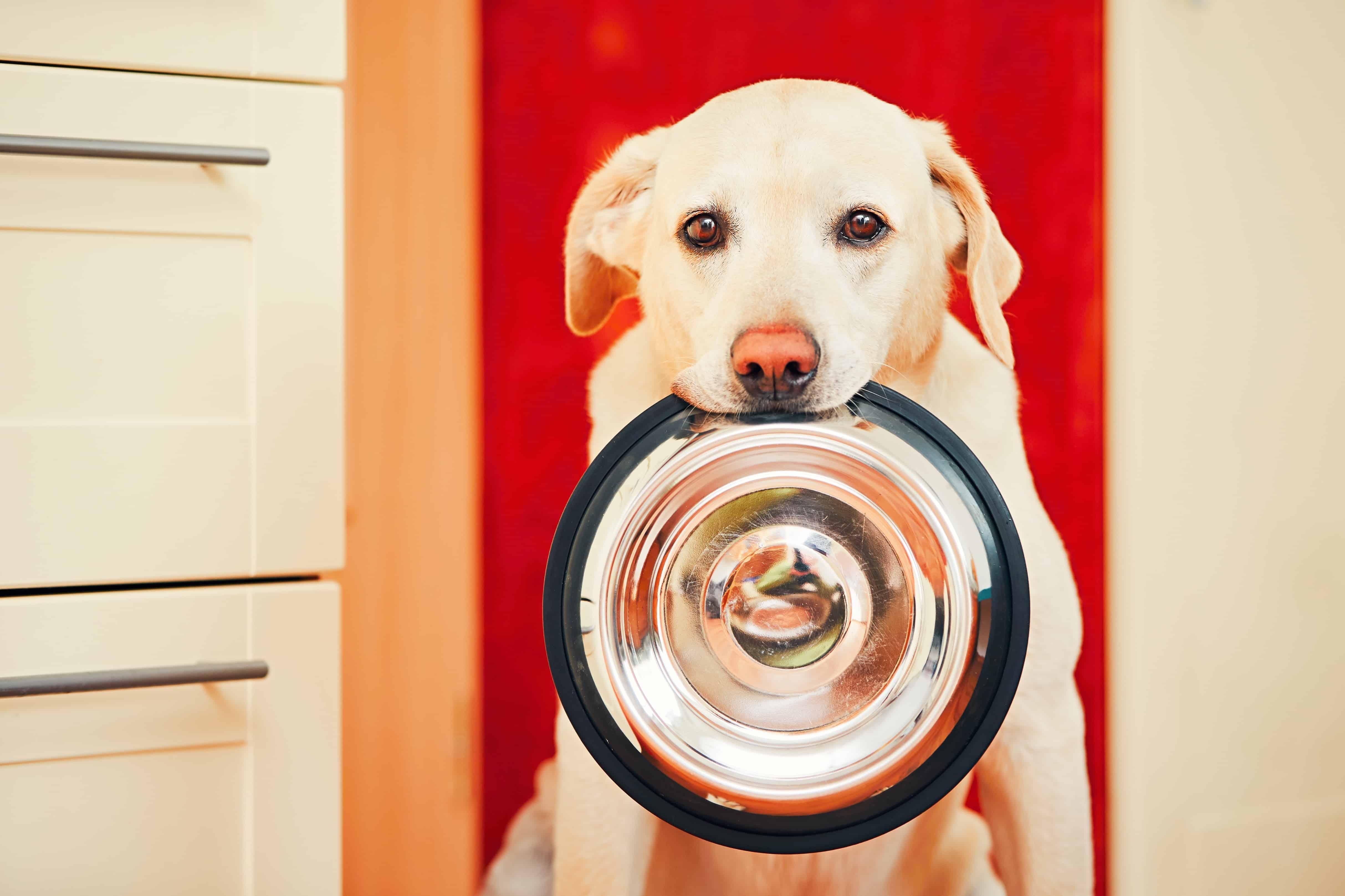 Miglior cibo ipoallergenico per cani 2020: Guida all'acquisto
