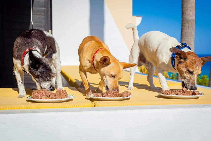I cani hanno bisogno di consumare i pasti ad una determinata ora e di mantenere una routine stabile. (Fonte: Damedeeso: 42304648/ 123rf.com)