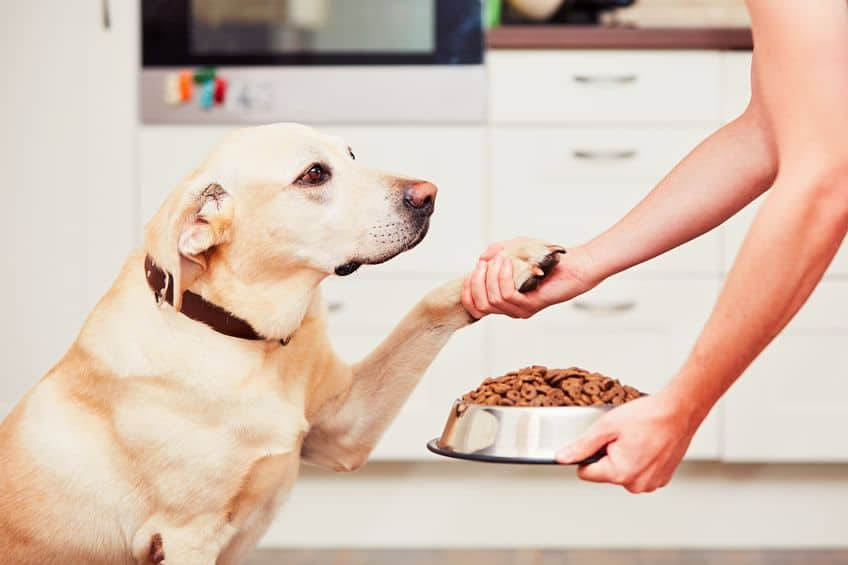 Food-for-dogs-before-xcyp1