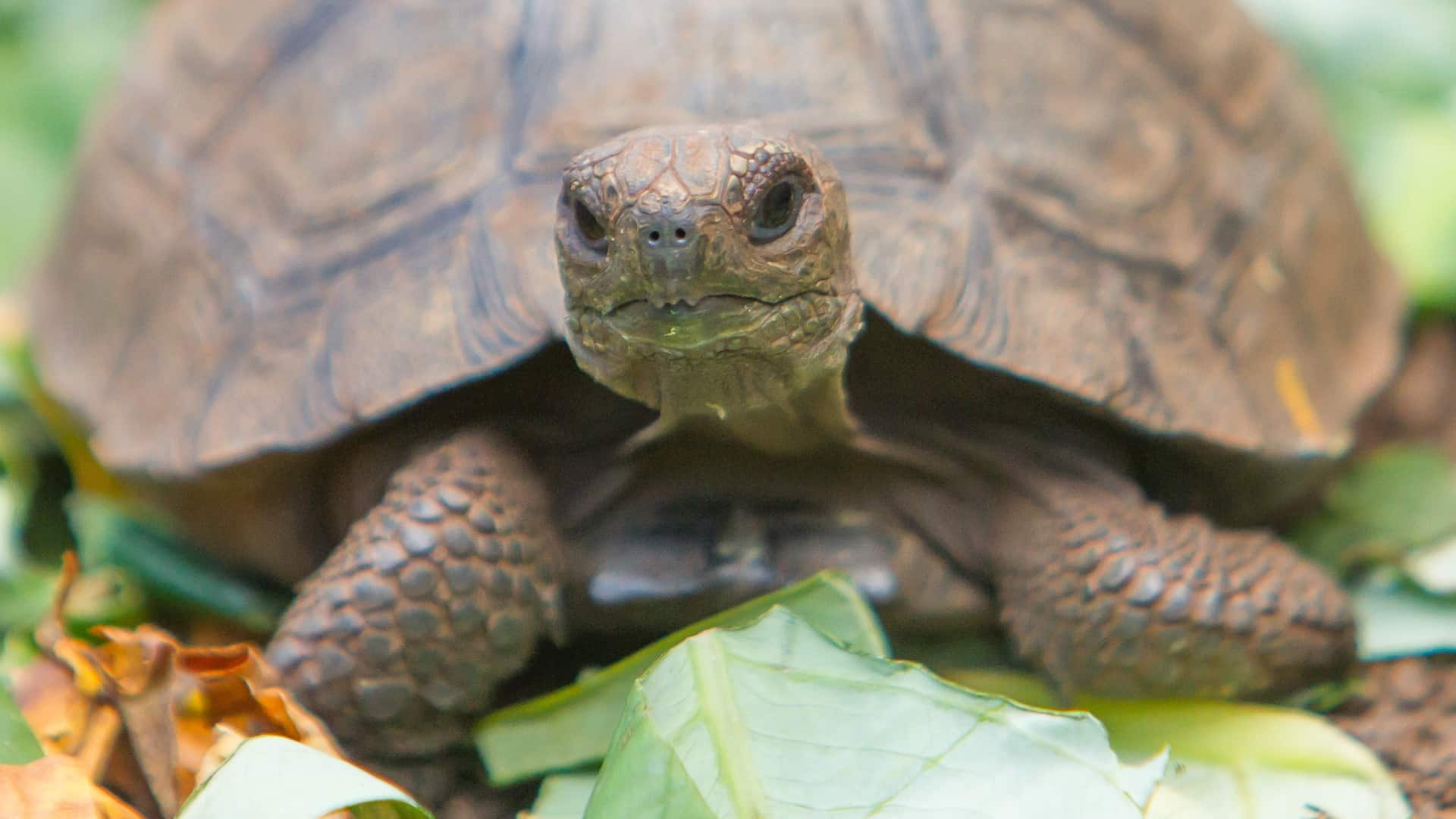 Miglior cibo per tartarughe 2020: Guida all'acquisto