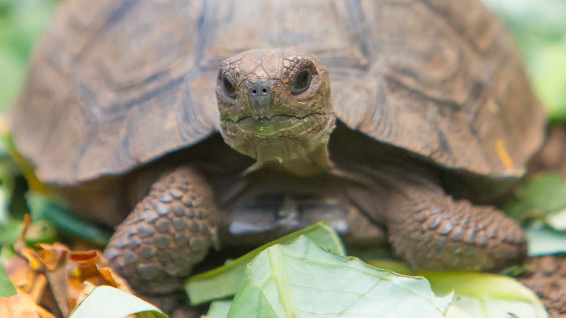 cibo-per-tartarughe-principale-xcyp1