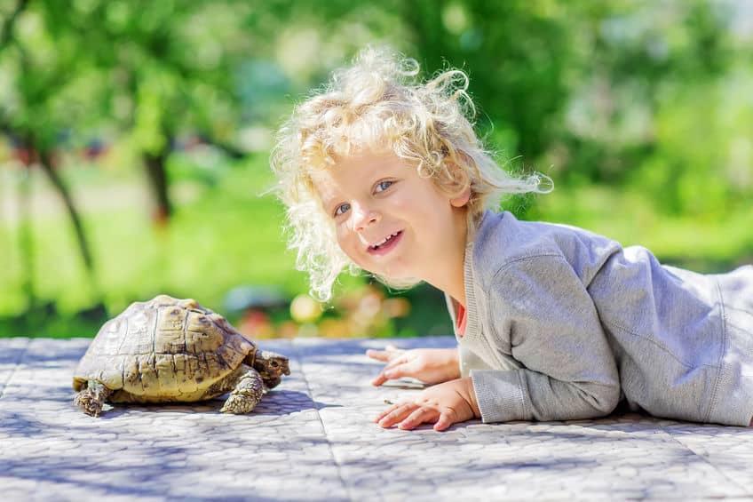 cibo-per-tartarughe-prima-xcyp1