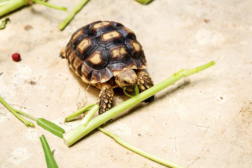 cibo-per-tartarughe-quattro-xcyp1