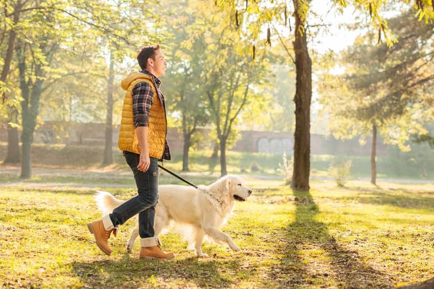 guinzaglio-addestramento-per-cani-seconda-xcyp1