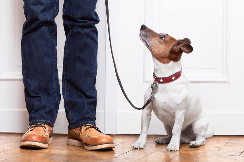 guinzaglio-addestramento-per-cani-prima-xcyp1