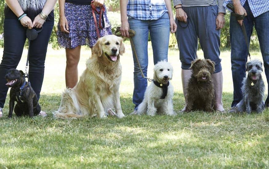 guinzaglio-addestramento-per-cani-xcyp1