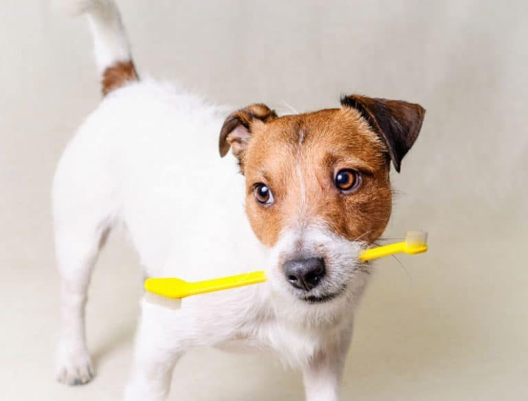 Dog with toothbrush in his mouth