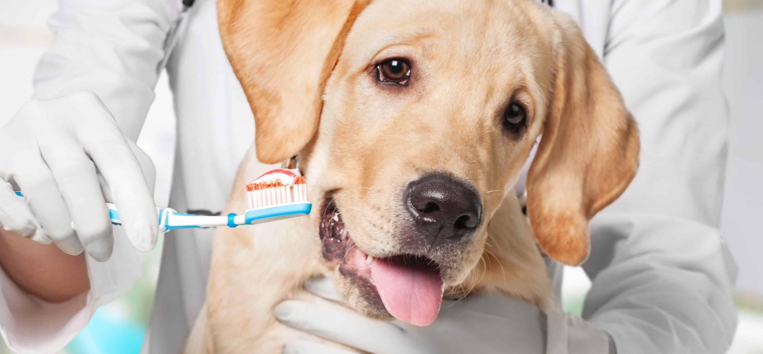 Spazzolino e dentifricio per un cane