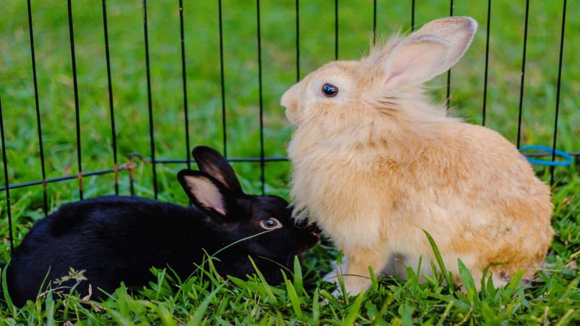 Miglior gabbia per conigli 2020: Guida all'acquisto
