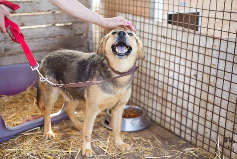 gabbia-per cani-prima-xcyp1